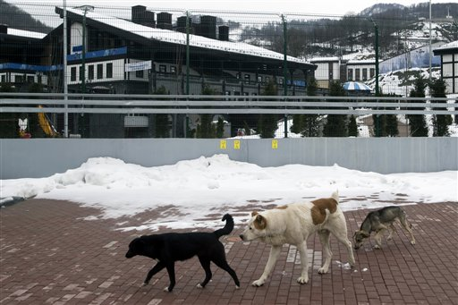 Sochi Olympics Stray Dogs